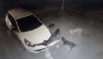 Köpekler otomobilin tamponunu parçaladı