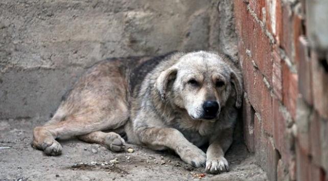 Manisada sokak köpeğine şiddet uygulayan kişiye ceza