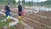 Bilecik'te 300 dekar tarım arazisi zarar gördü