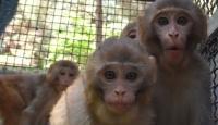 Ağrı'da yakalanan 4 yavru maymun koruma altına alındı