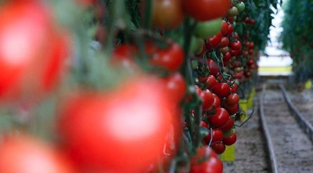 Türkiyenin meyve ve sebze ihracatı arttı