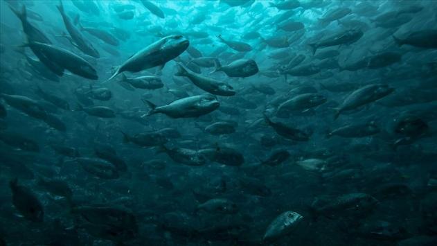 Bakan Pakdemirli: Su ürünleri sektörümüz yara almadan pandemiyi geçti