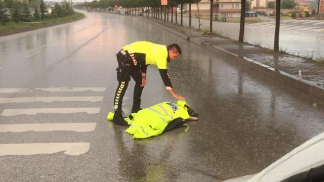 Otomobilin çarptığı yaralı köpeğe polis şefkati