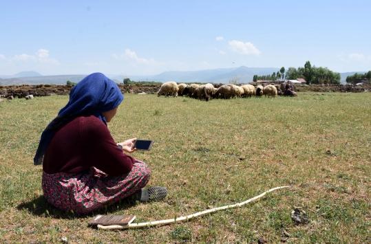 Hayvanlarını Muş Ovasında otlatan kız kardeşler, derslerini EBAdan takip ediyor