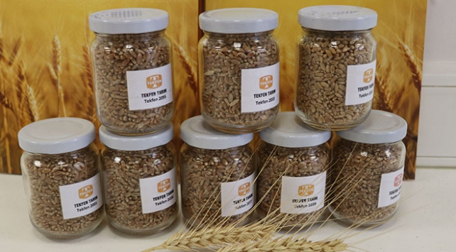 Adanadan Iraka yerli buğday tohumu ihracatı