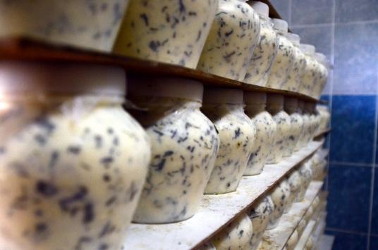 Bitlisli girişimci göçerlerden topladığı peynirleri Türkiyeye pazarlıyor