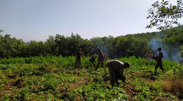 Lice kırsalında narkoterör operasyonu: Milyonlarca kök hint keneviri ele geçirildi