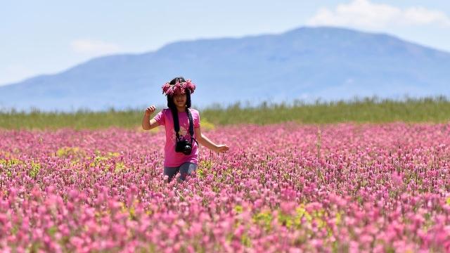 Van Gölü'nün çevresi çiçeklerle renklendi