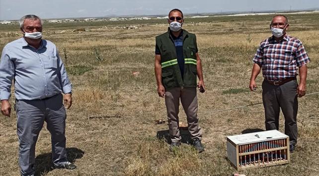 Flamingo ve sunu kuşu avına 13 bin lira ceza kesildi