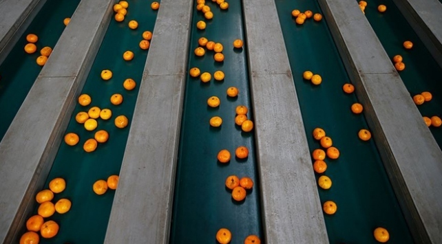 Rusyaya mandarin ihracatı 5 ayda yüzde 50 arttı