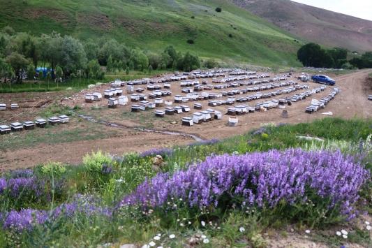 Karadenizin göçer arıcıları kaliteli bal için Ağrının dağlarını mesken tuttu