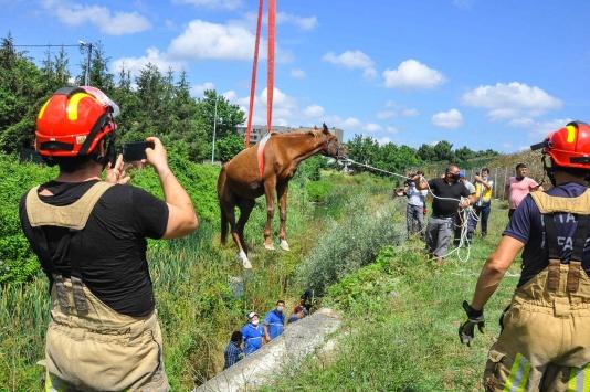 Eyüpsultanda dereye düşen at ve tayı kurtarıldı