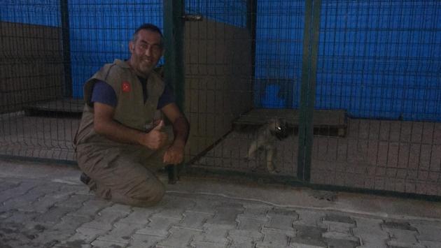 Mersinde kayalıklarda mahsur kalan köpek yavrusu 10 gün sonra kurtarıldı