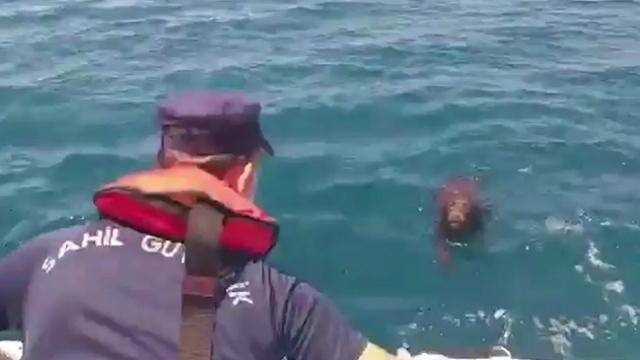İzmir'de denize düşen köpeği Sahil Güvenlik ekipleri kurtardı