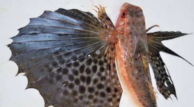 Vahşi balık türleri Akdenizin karakterini değiştirdi