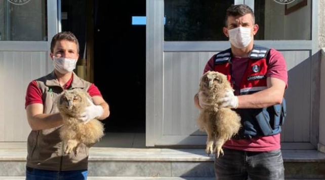 Puhu yavrularını satmaya çılaşan 4 kişiye 26 bin lira ceza