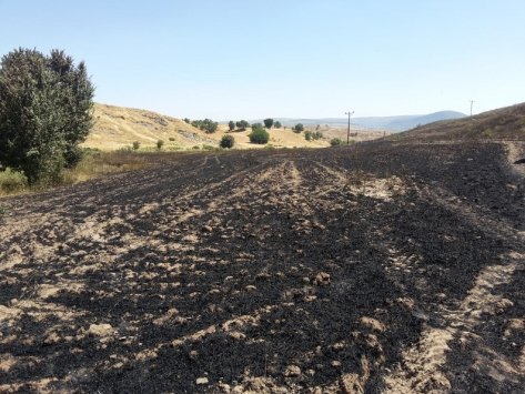 Kulpta ekili arazide yangın