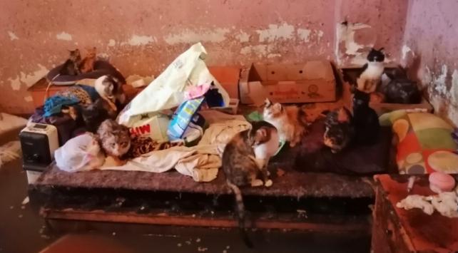 Evini su basan yaşlı kadın hayvanlarını bırakamadı