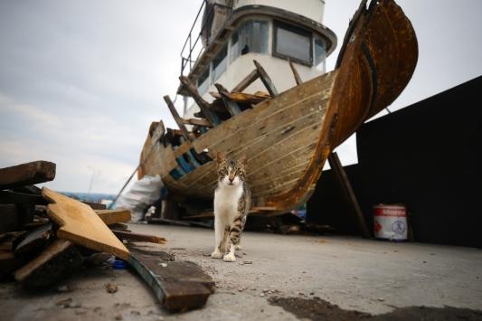 Balıkçılar fırtına sonrası denize açılmayı bekliyor