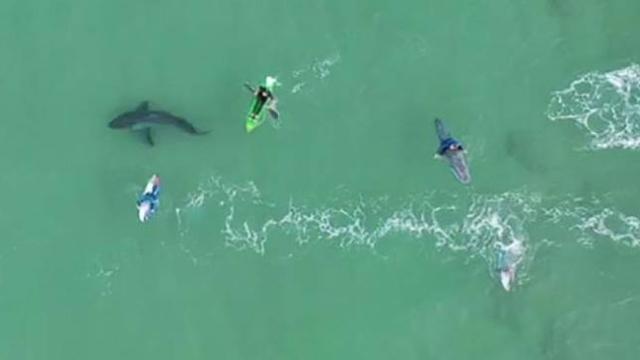 Güney Afrika'da köpek balığı tehlikesi drone ile görüntülendi