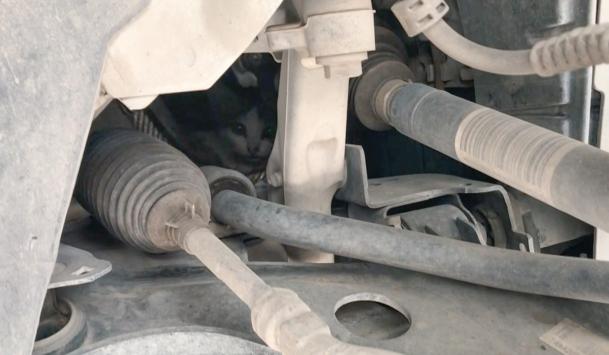Kiliste otomobilin motor kısmına sıkışan kedi yavrusunu itfaiye kurtardı