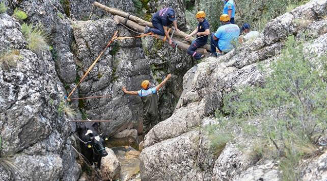Kanyonda mahsur kalan ineği itfaiye ekipleri kurtardı