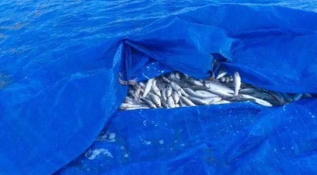 Vanda kaçak avlanılan 20 ton inci kefali suya geri bırakıldı