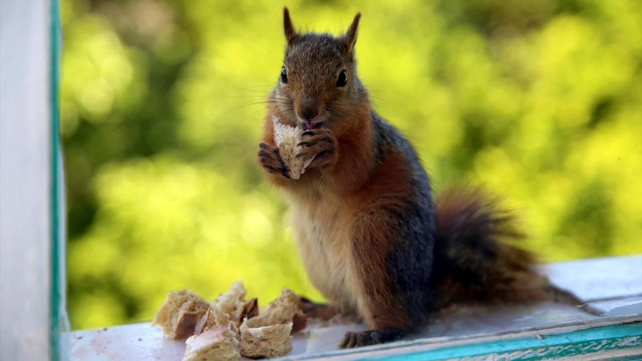 Sevimli misafirlerini evinin penceresinde ağırlıyor