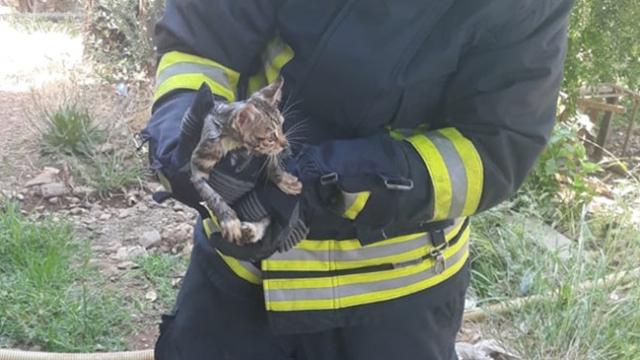 Kafası demir boruya sıkışan kediyi itfaiye kurtardı