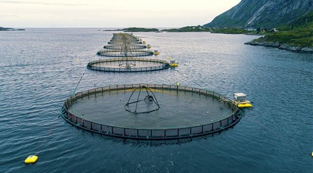 Dünyada ve Türkiyede balık yetiştiriciliği artıyor