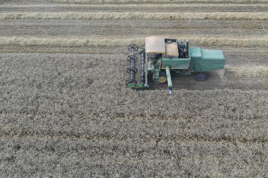 Trakyada buğday hasadı başladı