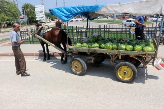 Adanada karpuz taşıyan at arabasından düşen seyyar satıcı yaralandı
