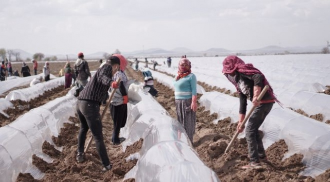 Mevsimlik tarım işçilerine yönelik alınması gereken önlemler