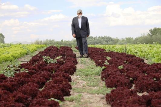 Sebze yetiştiriciliği yapan 74 yaşındaki İzzet amca azmiyle örnek oluyor