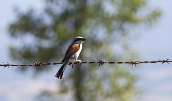 Kızılırmak Deltası Kuş Cennetinde pek çok canlı türü görüntülenebiliyor
