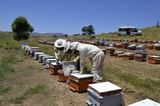 Genç arıcı 2900 rakımda organik bal üretiyor