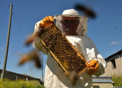 Karsta arıların oğul verme ritüeli ilginç görüntüler oluşturdu