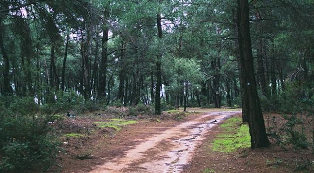 Gıda, tarım ve orman alanındaki düzenlemeler Komisyonda
