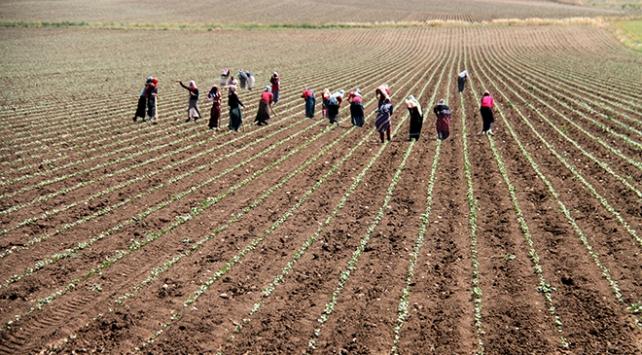 Kırsal kalkınma yatırımlarına 855 milyon lira hibe