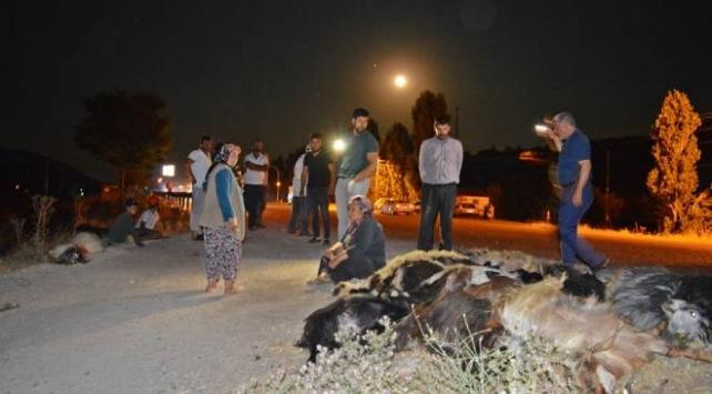 Adıyamandaki kazada 22 keçi telef oldu