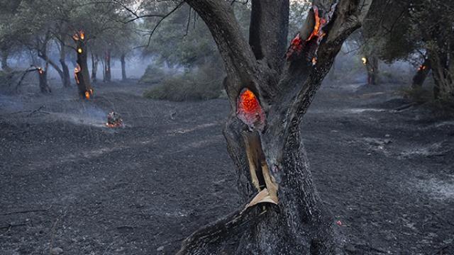 Gelibolu yangınından termal kamera görüntüleri