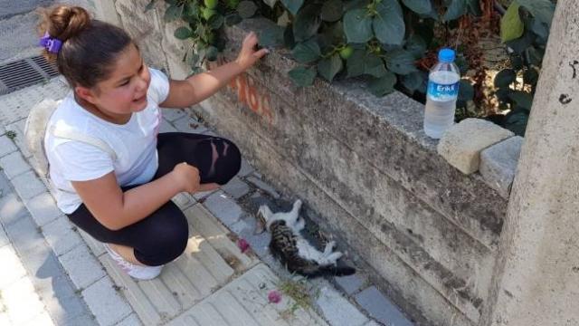 Can çekişen kediyi gören küçük Laden gözyaşlarına boğuldu