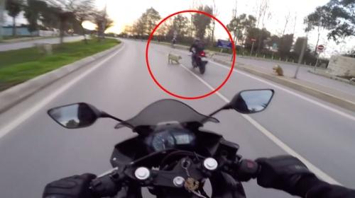 Yolda hayvana çarpan sürücü ne yapmalı?
