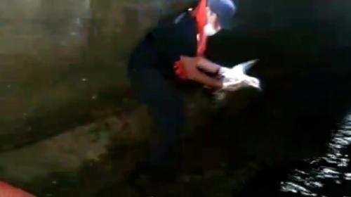 Yaralı martıyı sahil güvenlik ekipleri kurtardı