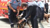 Balıkesir Büyükşehir İtfaiyesine 6 arama kurtarma ve iz takip köpeği dahil edildi