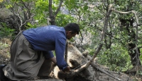Hakkari'de ayağı tele takılan ayı kurtarıldı
