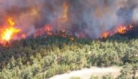 Türkiye'deki orman yangınlarının büyük kısmı insan kaynaklı