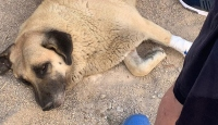 Sokaktaki köpeği bıçaklayan kişi gözaltına alındı