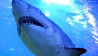 Köpek balığı saldırısına uğrayan sörfçü hayatını kaybetti