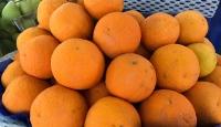 3 kentten 256 milyon dolarlık turunçgil ihracatı